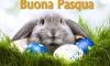 buona-pasqua-e-coniglio-con-uova-colorate