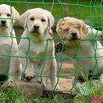 3 cani