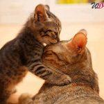 bacio animale
