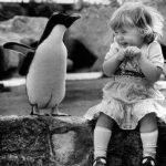 bimba pinguino