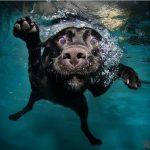 cane mare