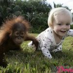 scimmia bimbo