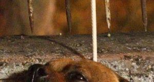 Aggressione di un cane a Roma in località San Basilio