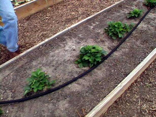 Bricolageuando e come irrigare