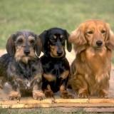 Cani da compagnia: quali comprare?