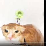 Gatto che ama farsi la doccia