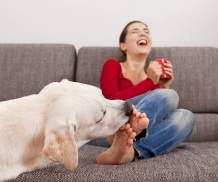 leccata cani