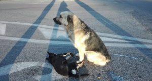 Cane veglia il suo amico