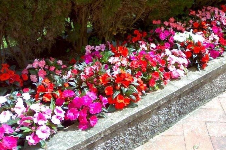 piante da piantare in primavera