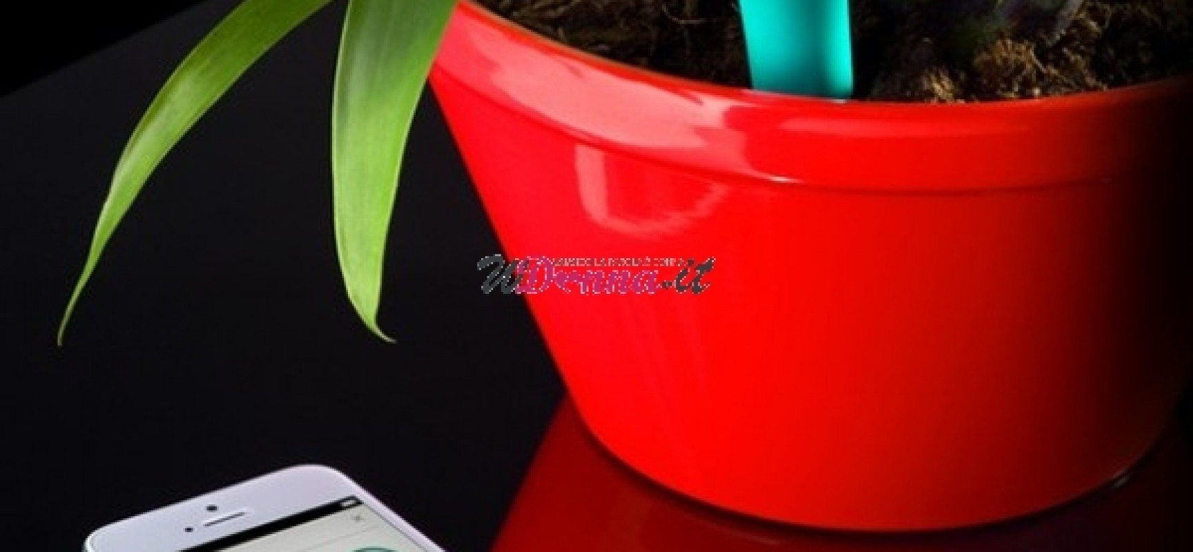 flower power un app per parlare alle piante. Black Bedroom Furniture Sets. Home Design Ideas