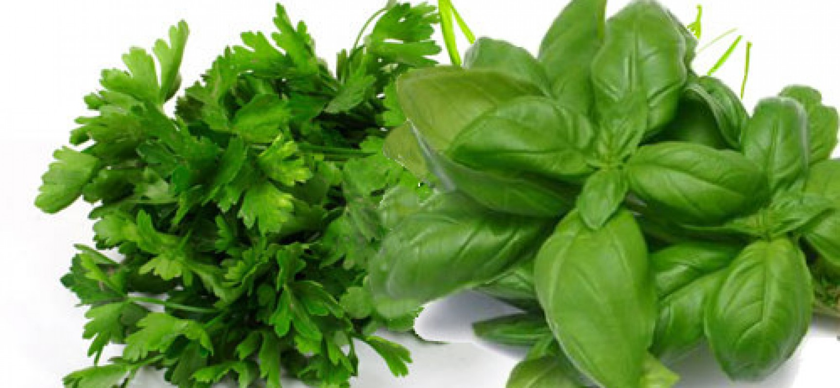 Coltivare il prezzemolo e il basilico in casa con semplici for Coltivare il basilico