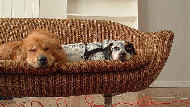 Come eliminare i cattivi odori degli animali - Eliminare gli odori in casa ...