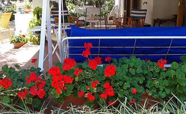 Antizanzare da giardino i rimedi pi efficaci - Rimedi contro le zanzare in giardino ...