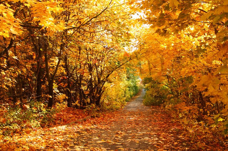 Perché cadono le foglie in autunno? WDonna it
