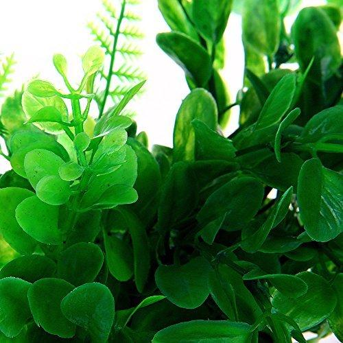 Fertilizzante fatto in casa per rinvigorire le piante for Concime per gerani fatto in casa