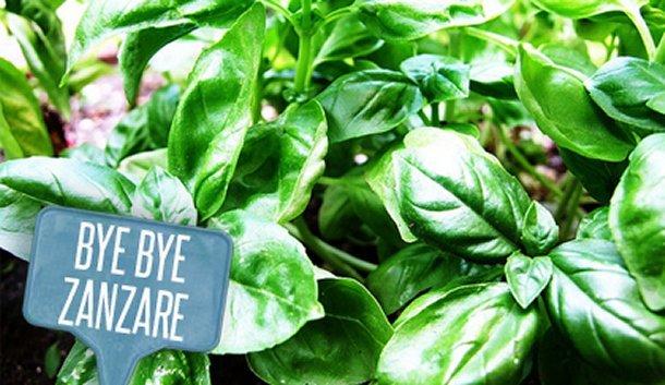 Zanzare addio soluzione naturale per piantarla una volta per tutte - Rimedi contro le zanzare in giardino ...